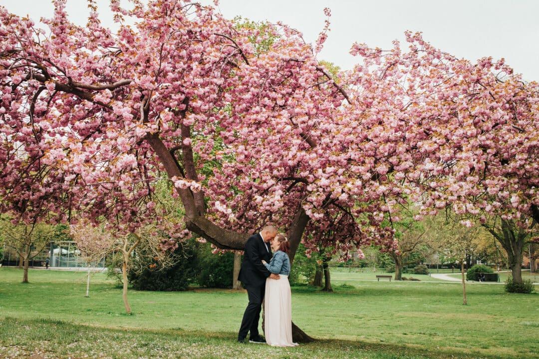 Brautpaar steht Kopf and Kopf unter einem blühenden Kirschbaum im Herrngarten Darmstadt