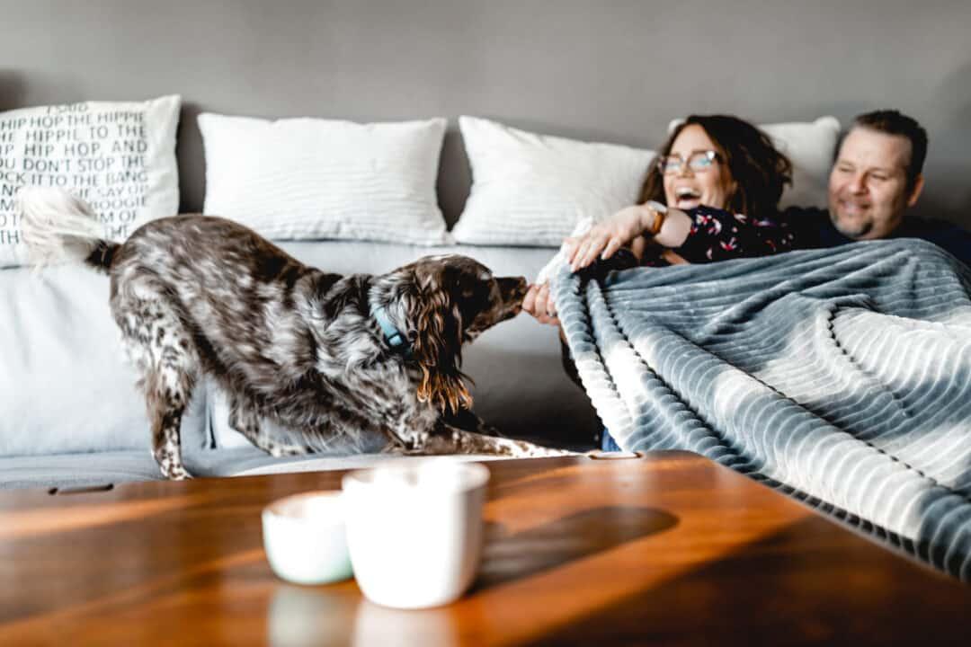 Paar mit Hund der an Decke zieht beim Familienshooting zuhause